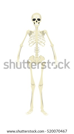 Isolated human skeleton. All human bones as rib, skull and spine. Mockup for biology and sciency. Halloween scary image.