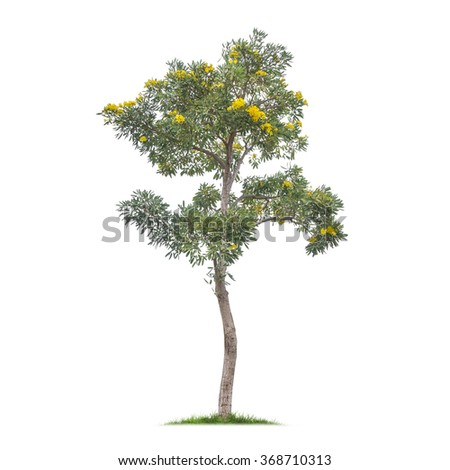 Isolated tree with yellow flower on white background