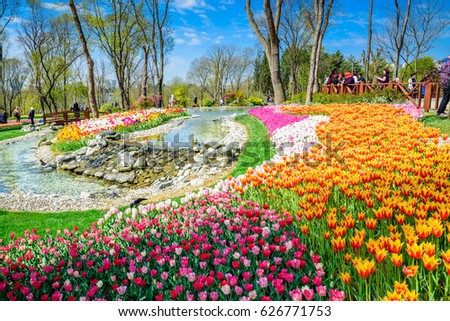 istanbulturkey april 152017 traditional tulip festival stock photo