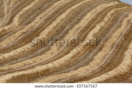 Italy, Sicily, Catania province, countryside, harvested hay field