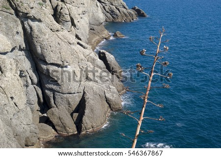 Italy. The Ligurian rocky coastline