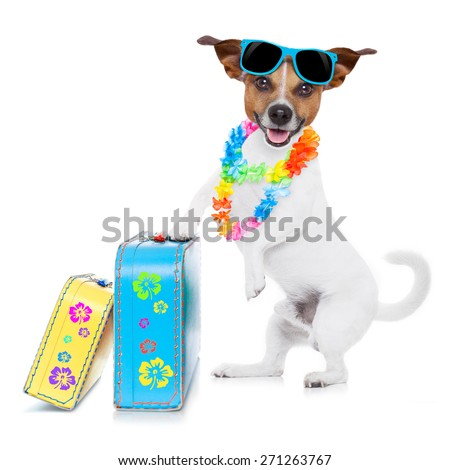 jack russell dog packing luggage and baggage and a suitcase for summer holiday vacation, wearing sunglasses and a flower chain isolated on white background