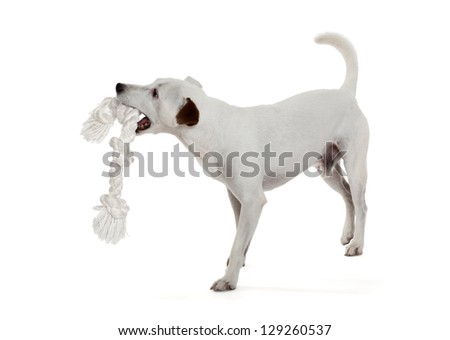 Dog Biting Rope Silhouette