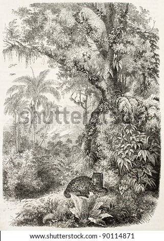 Jaguar resting in the jungle, old illustration. By unidentified author (from the book La Plante by J. Schleiden), published on L'Illustration, Journal Universel, Paris, 1858