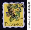 JAMAICA - CIRCA 2000: A stamp printed in Jamaica shows Pimento plant, circa 2000 - stock