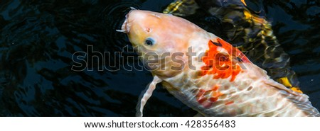 Shrimp on plastic bag stock photo 424969186 shutterstock for Green koi fish for sale