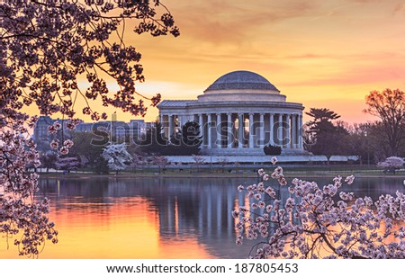 Jefferson Memorial in Washington DC reflecting in the water of the Tidal Basin at sunrise during the cherry blossom festival.