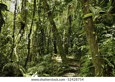 jungle in Bolivian pre-mountain rainforest in Parque Carascu jungle trees evergreen humid forest