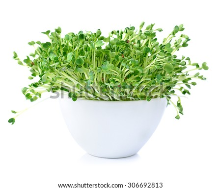 kaiware sprout, japanese vegetable or watercress on white background