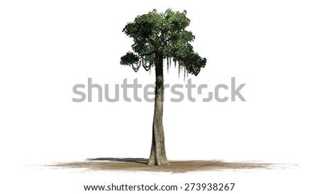 2020 Other Images Kapok Tree Clip Art