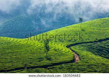 kerala-india-travel-background-green-tea-plantations-in-munnar-kerala ...