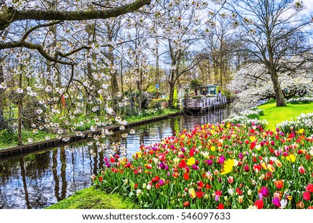 Keukenhof park of flowers and tulips in the Netherlands. Beautiful outdoor scenery in Holland