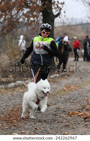Kharkov, UKRAINE - November 15, 2014: Tatiana Yurchenko at canicross heats during Women's 3100 m at Sled dogs dry land race Autumn Cup - 2014