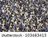 King penguin colony. - stock photo