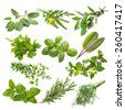 Kitchen herbs collection isolated on white background - stock photo