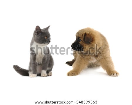 kitten and puppy brownand  isolated on a white background