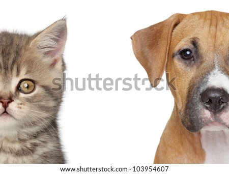 Kitten and puppy. Half of muzzle close up portrait on a white background