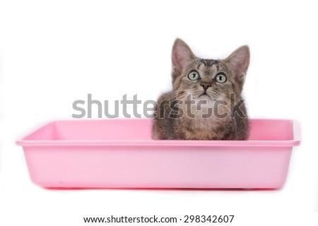 how to litter train a cat kitten