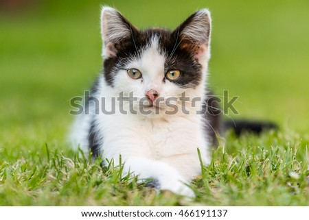 Kitty, Small Cat on grass
