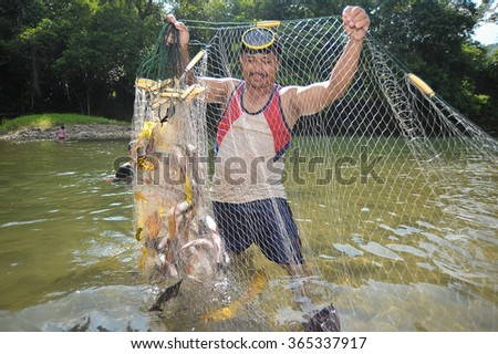 "Kiulu, Sabah Malaysia - Jun 27, 2013. Unidentified man checking fish net full of freshwater fish called ""Ikan Kelah"" or Malaysian Mahseer during fish harvesting season at Kiulu River."
