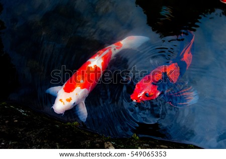 Dog peeing park stock photo 544727569 shutterstock for Puddle of fish