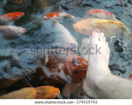 Flamingo mural cement painting concept stock photo for Where to buy koi fish near me