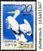 "KOREA - CIRCA 1979: A stamp printed in North Korea shows Pelican, with the inscription ""Central Zoo"", from the series ""Central Zoo, Pyongyang"", circa 1979 - stock photo"
