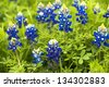 Lady bug with bluebonnets - stock photo