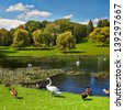 Lake in the summer park. Birds on the lake. - stock photo