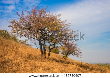 landscape; autumn; yellow dry grass; on a background two trees, blue sky