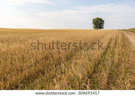 Landscape of a road to a lone standing tree with a field of grain covered by blue flowers