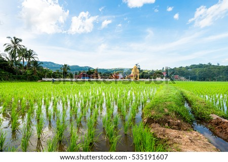 Landscape of green rice field in countryside of thailand with clouds and blue sky