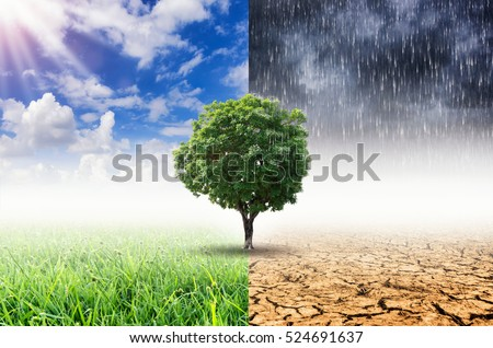 Landscape of Trees With the changing environment, Concept of climate change.