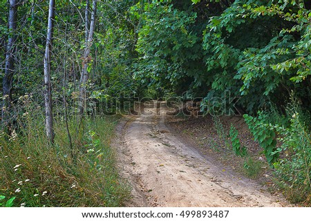 landscape Road in the deciduous forest
