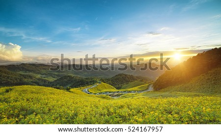 Landscape sunset nature flower tung bua tong mexican sunflower field in mae hong son thailand