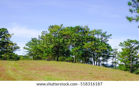 Landscape with pine forests with grass hill at sunny day in Dalat, Vietnam. Dalat is surrounded by hills, pine forests, lakes and waterfalls.