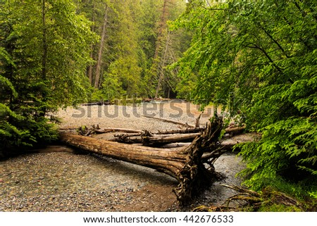 Large fallen tree in Glacier National Park, Montana.