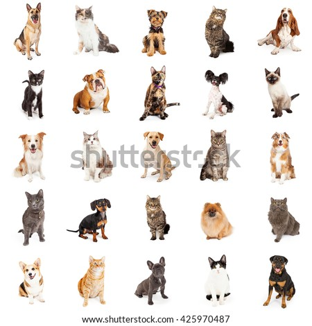 Large group of cats and dogs on square white background that can be made into repeating pattern