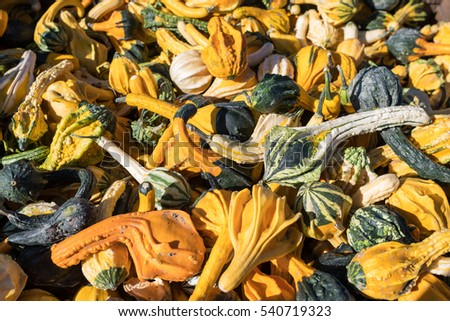 Large pile of s specialty squash and pumpkins filling the entire frame