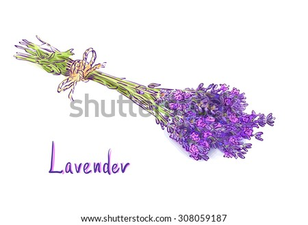 Lavender bunch with a jute rope. Sketch with watercolor imitation texture.