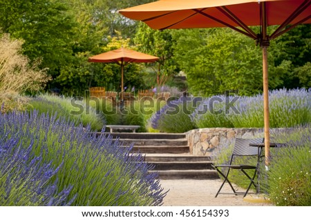 Lavender garden with outdoor sitting area, focus in on the foreground