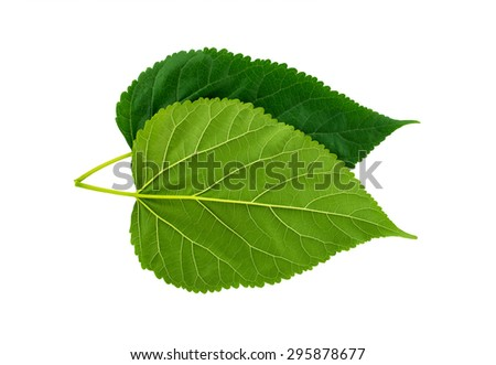 Leaf back and face on white