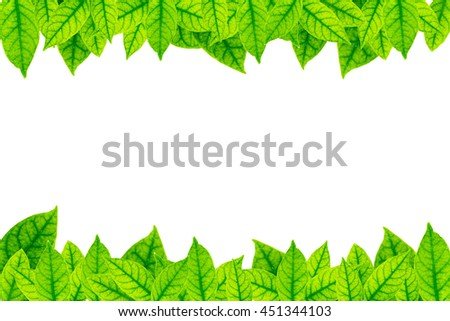 leaf frame on white background