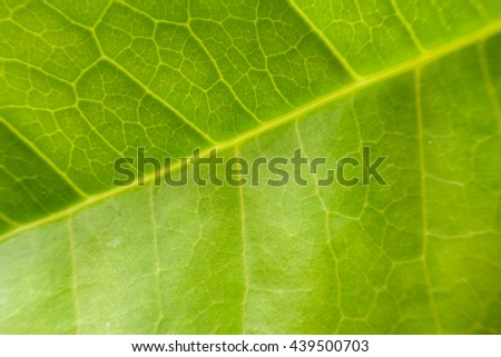 leaf texture backgrounds