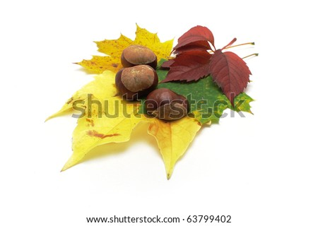 Leafs and conkers isolated on white background