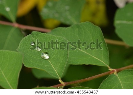 leaves and water droplets