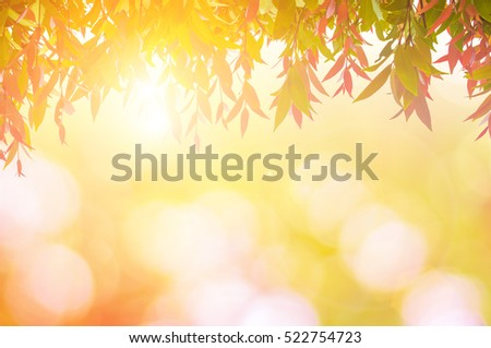 leaves red In spring or Beautiful in blurred nature over sunset or background.art design light branch color sun.Beautiful leaves over blurred nature over golden tree chistmas concept.