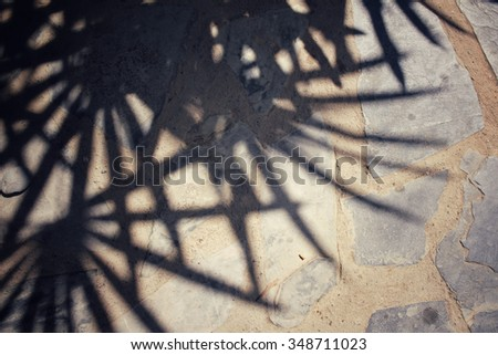 Leaves with shadow