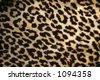 Leopard print - stock