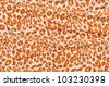 Leopard texture closeup - stock photo